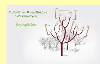 Blatt Pflanze Wikiwand 12