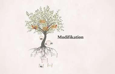 Mutation Und Modifikation By Luca Maushagen 8