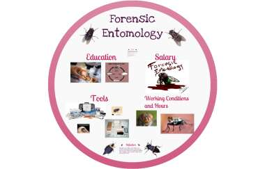Forensic Entomology By Brianna Gerhardt